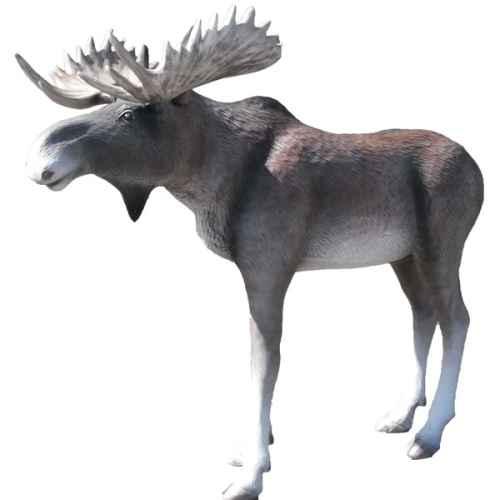 +ICE202 Moose 3D model