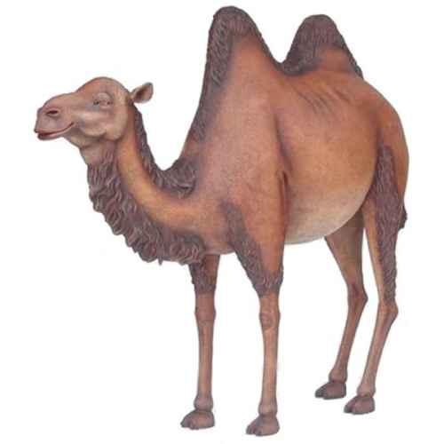 +JUN214B Camel