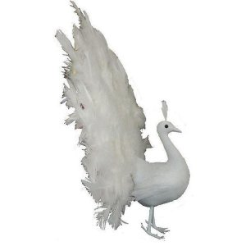 +BUR201W Peacock white open feathers