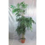 PLA019 Bamboo Tree 2m