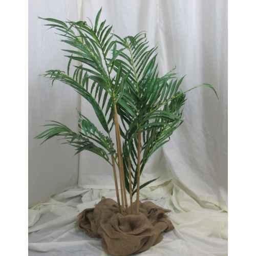 PLA019A Bamboo Palm 1
