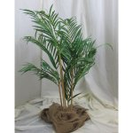 PLA019A Bamboo Palm 1