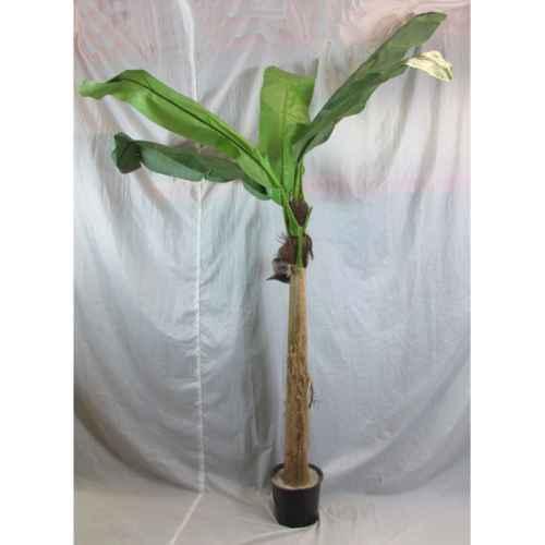 PLA014 Banana Tree 2