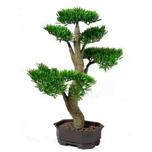 PLA022 Bonsai Tree