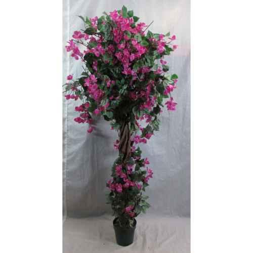 PLA012A Bourganvillea Pink