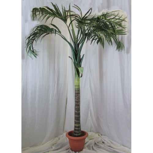 PLA021 Coco Palm 2