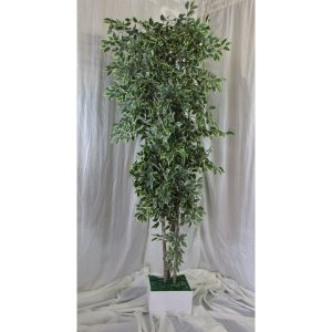 PLA016A Ficus Tree Varigated 2
