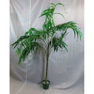 PLA013A Kentia Palm 1