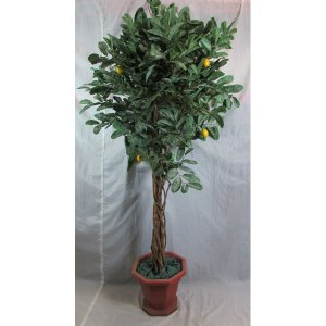 PLA023 Lemon Tree 1