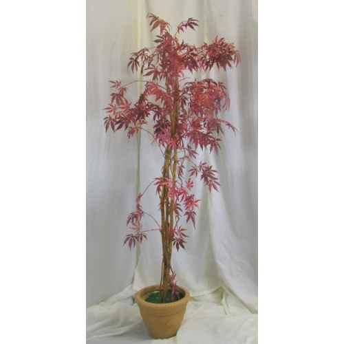 PLA003 Maple Leaf Tree 1