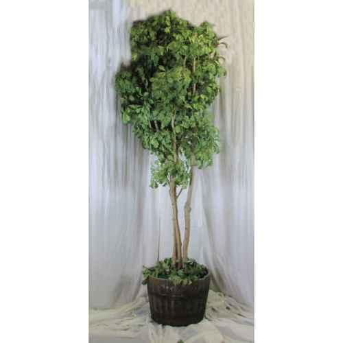 PLA018 Oak Tree 2