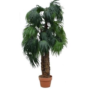 PLA015 3Stem Palm 2
