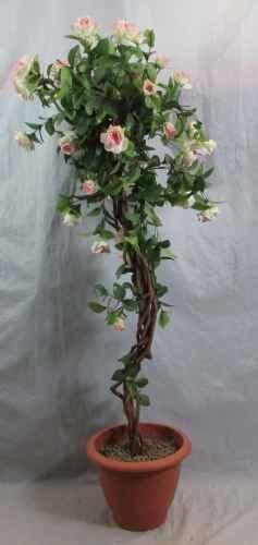 PLA004 Rose Bush Pink Flower