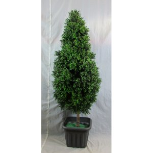 PLA010F Topiary Flame Boxwood