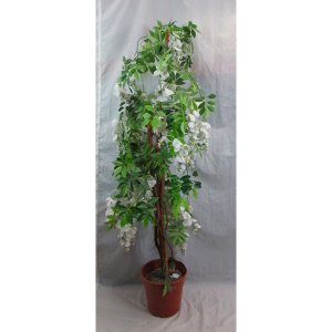 PLA011 Wisteria Tree White 1
