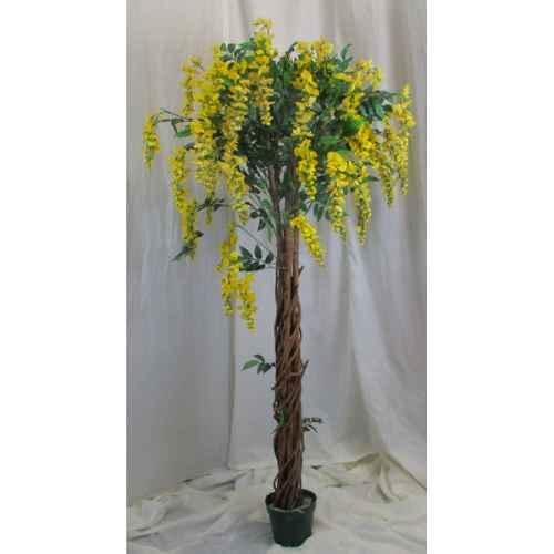 PLA011A Wisteria Tree Yellow Flower 1