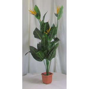 PLA051 Bird of Paradise Plant 1