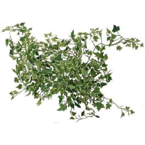 PLA037A Needlepoint Ivy Leaf (Small) Trail