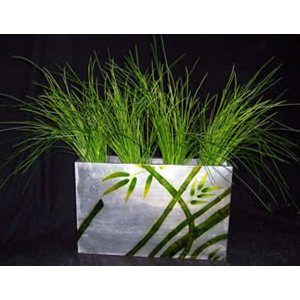 PLA103A Onion Grass in Planter
