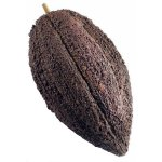 CAT211 Cacao Fruit Large