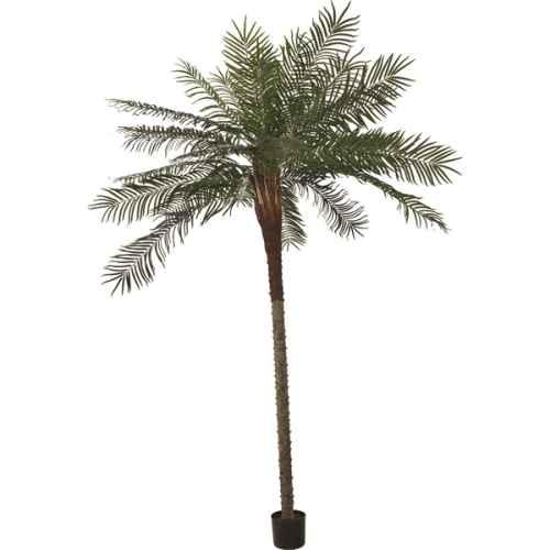 PLA021A Phoenix Palm Tree 3m
