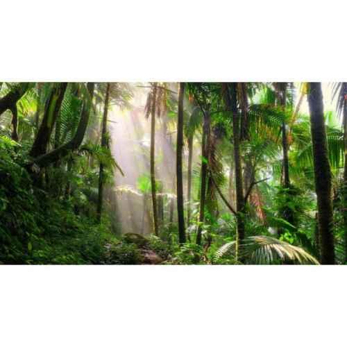 +JUN001 Rainforest Backdrop