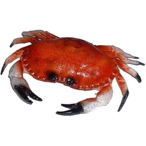 CAT230-231 Crab model