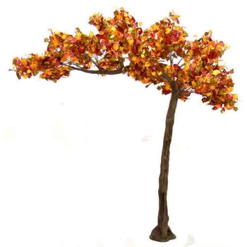 PLA640 Autumn Full Canopy Tree