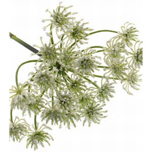 PLA118 Cow Parsley 74cm