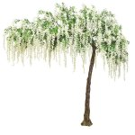 Cream Hanging Wisteria Canopy Tree