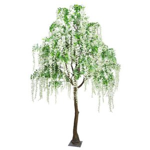 Cream Hanging Wisteria Standard Tree