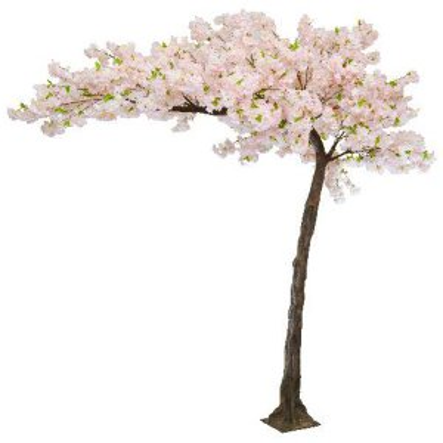 Pink cherry canopy tree web