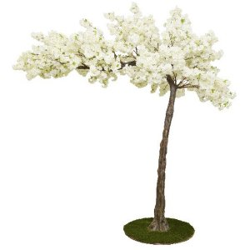 Cream cherry canopy tree web