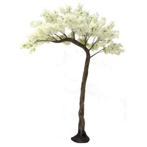 Cream Cherry Blossom Half Canopy tree web