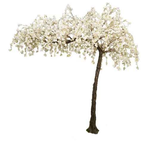 Cream hanging cherry canopy tree web