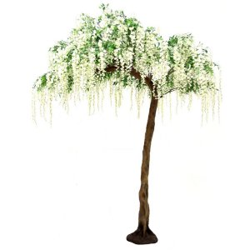 Cream Hanging Wisteria Half Canopy Tree