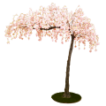 Pink hanging cherry blossom canopy tree web