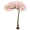 Pink hanging cherry blossom half canopy tree