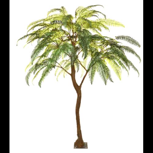 Fern Standard tree web