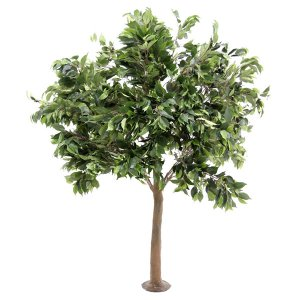 PLA668 Ficus table top tree