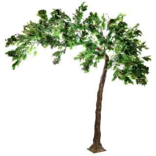 PLA660 Oak leaf canopy tree