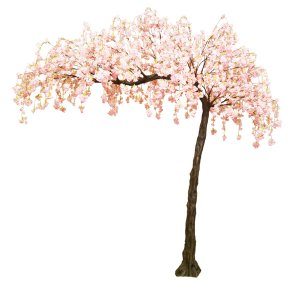 Pink hanging cherry blossom canopy tree
