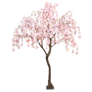 Pink hanging cherry blossom standard tree web