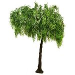 Weeping Willow Half Canopy Tree