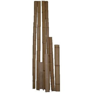 +CHI205 Bamboo Canes
