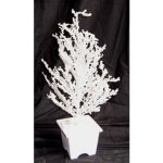 +CHR312W White Ice Tree