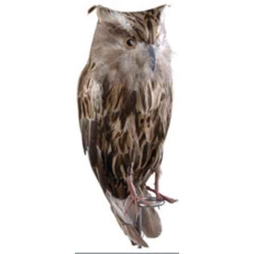 +FAR208 Wise Owl